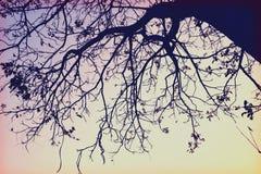 Hintergrundbeleuchtungsniederlassung (Wildnisretrostil) Lizenzfreies Stockbild