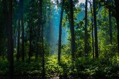 Hintergrundbeleuchtungssonnenstrahlen Stockfotografie