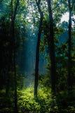 Hintergrundbeleuchtungssonnenstrahlen Lizenzfreies Stockfoto