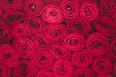 Hintergrundbeschaffenheit der roten Rosen Lizenzfreies Stockbild