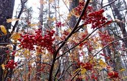 Hintergrundbeschaffenheit des Gelbs lässt Herbst Stockfoto