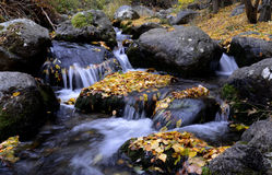 Hintergrundbeschaffenheit des Gelbs lässt Herbst Stockfotos
