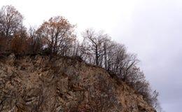 Hintergrundbeschaffenheit des Gelbs lässt Herbst Stockfotografie