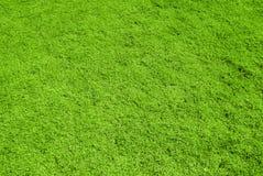 Hintergrundbeschaffenheit des grünen Grases Lizenzfreie Stockfotografie