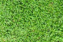 Hintergrundbeschaffenheit des grünen Grases Lizenzfreie Stockfotos