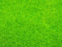 Hintergrundbeschaffenheit des grünen Grases lizenzfreies stockbild