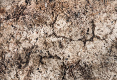 Hintergrundbeschaffenheit des trockenen Bodens Stockbild