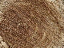 Hintergrundbeschaffenheit eines Baums verringert Lizenzfreie Stockfotografie