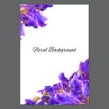 Hintergrundbeschaffenheit gemacht von der Iris und vom Platz für Text Lizenzfreies Stockfoto
