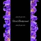 Hintergrundbeschaffenheit gemacht von der Iris und vom Platz für Text Stockbilder