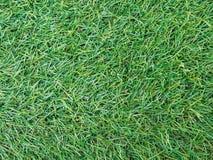 Hintergrundbeschaffenheit mit gefälschtem Gras Lizenzfreies Stockfoto