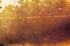 Hintergrundbeschaffenheit und Muster eines Abschnitts der Wachsbienenwabe Stockbilder