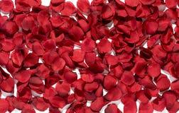 Hintergrundbeschaffenheit von rosafarbenen Blumenblättern des reichen Rotes Lizenzfreies Stockbild