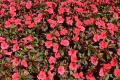 Hintergrundblumen und -blatt im Garten am Morgen Lizenzfreie Stockfotos