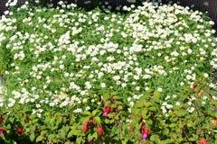 Hintergrundblumen und -blatt im Garten am Morgen Stockfoto