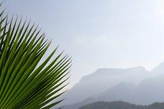 Hintergrundgebirgs- und -palmblattnahaufnahme stockfotos