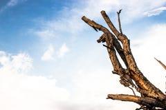 Hintergrundhimmelbäume Stockfotos