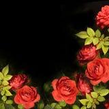 Hintergrundkarte der roten Rosen Stockfotos