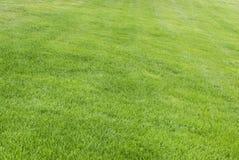 Hintergrundmuster des grünen Grases Stockfotos