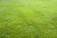 Hintergrundmuster des grünen Grases Stockbilder