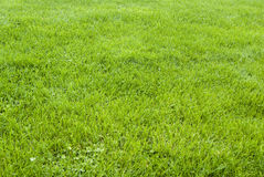 Hintergrundmuster des grünen Grases Lizenzfreie Stockfotos