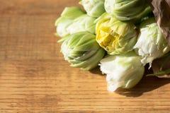 Hintergrundnahaufnahmeblumen-Weißtulpe Stockfoto