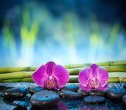 Hintergrundorchideenstein und -bambus im Garten lizenzfreie stockfotografie
