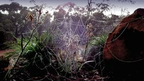 Hintergrundphotographie des Spinnennetzes Lizenzfreies Stockfoto