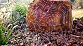 Hintergrundphotographie des Spinnennetzes Lizenzfreies Stockbild