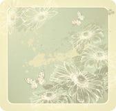 Hintergrundschablone mit blühenden Gänseblümchen und Kolben Lizenzfreies Stockfoto