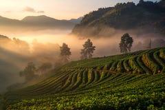 Hintergrundunschärfe-Lichtmorgen mit dem Nebel, der auf den Berg schwimmt stockbild