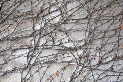 Hintergrundwand mit Zerstörung des Gipses Lizenzfreies Stockbild