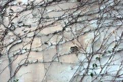 Hintergrundwand mit Zerstörung des Gipses Lizenzfreies Stockfoto