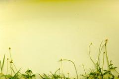 Hintergrundwand von schönen Blumen Stockbilder