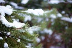 Hintergrundwinter Weihnachten Die Niederlassungen der Kiefer in t Stockfotos