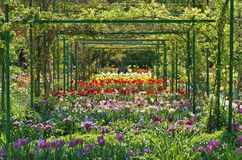 Hinterhof-Garten Lizenzfreies Stockfoto