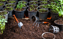 Hinterhof-Gemüsegarten Stockfotos