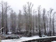 Hinterhof im Winter Lizenzfreie Stockfotos