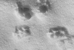 Hinterhund im Schnee Lizenzfreies Stockbild