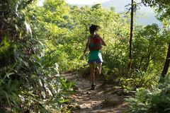 Hinterläufer, der in Morgenwald läuft Stockbild