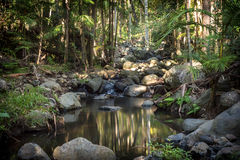 Hinterland Rainforest Creek Royalty Free Stock Photos