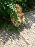 Hinterlistiges Kätzchen Stockfotografie