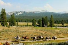 Hinterreiten an Tuolumne-Wiesen, Yosemite Nationalpark stockfotos