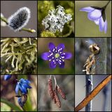 Hints of spring. New life in spring - nature details Stock Photo