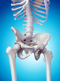 The hip bone Royalty Free Stock Photo