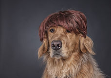 Hip Doggy Royalty Free Stock Photography