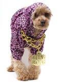 Hip Hop-Hund Lizenzfreies Stockbild