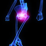Hip joint Royalty Free Stock Image