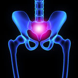 Hip joint Stock Photography