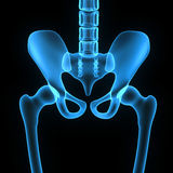 Hip joint. The hip joint is one of the most important joints in the human body. It allows us to walk, run, and jump. It bears our body's weight and the force Stock Images